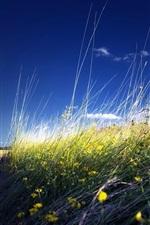 Preview iPhone wallpaper Summer, field, flowers, blue sky