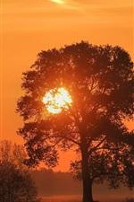 미리보기 iPhone 배경 화면 일몰, 나무, 붉은 하늘, 실루엣