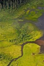 Pântano, rio, árvores, verde, vista de cima