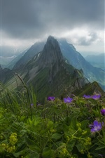 Preview iPhone wallpaper Switzerland, Appenzell Alps, flowers, mountains, clouds, fog