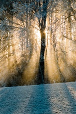 Preview iPhone wallpaper Switzerland, shadows, forest, trees, snow, sun rays