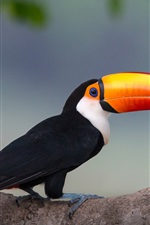 Preview iPhone wallpaper Toucan, beak, bird, side view