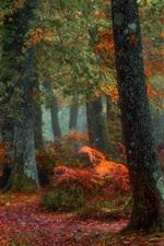 미리보기 iPhone 배경 화면 나무, 숲, 가을, 땅, 나뭇잎