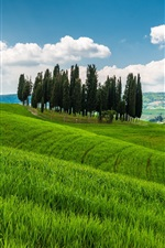 Preview iPhone wallpaper Tuscany, Italy, hills, trees, grass, fields, clouds