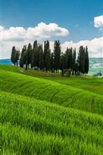 Toscana, Itália, colinas, árvores, grama, campos, nuvens