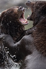 Preview iPhone wallpaper Two bears playful in the water