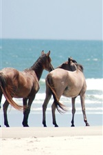Preview iPhone wallpaper Two horses, beach, sea
