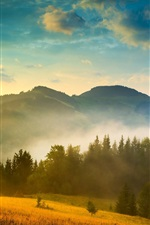 Preview iPhone wallpaper Ukraine, Carpathians, forest, mountains, fog, clouds, sun, morning