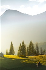 Preview iPhone wallpaper Ukraine, Carpathians, mountains, trees, fog, morning