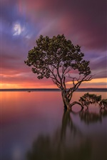 Preview iPhone wallpaper Victoria, Australia, lake, tree, sunset, glow