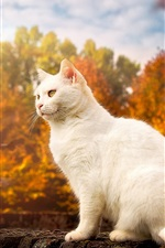 Preview iPhone wallpaper White cat, yellow eyes, autumn