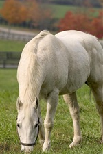 Preview iPhone wallpaper White horse eat grass