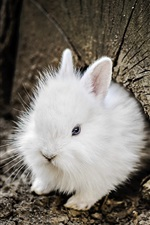 Preview iPhone wallpaper White rabbit, tree trunk