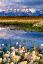 Preview iPhone wallpaper Wildflowers, lake, mountains, clouds