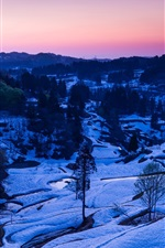 Winter, snow, trees, valley, dusk