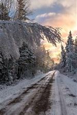 Winter, trees, road, snow