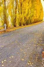 Preview iPhone wallpaper Autumn, road, trees, yellow leaves, nature