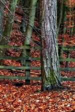 Autumn, trees, fence, red leaves