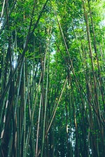 Preview iPhone wallpaper Bamboo forest, nature