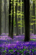 Preview iPhone wallpaper Beautiful forest, blue flowers