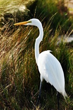 Preview iPhone wallpaper Beautiful heron, grass
