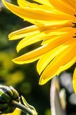 미리보기 iPhone 배경 화면 꿀벌, 수분, 노란 꽃