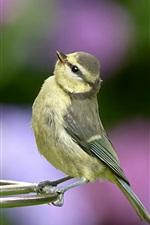 Preview iPhone wallpaper Bird look at birdcage
