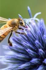 Blue flower, pin petals, bee