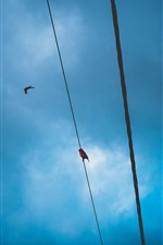 Preview iPhone wallpaper Blue sky, wire, birds