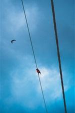 Blue sky, wire, birds