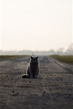 Preview iPhone wallpaper British cat sit on ground