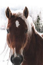 Preview iPhone wallpaper Brown horse, winter, snow