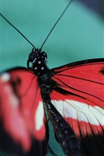 Preview iPhone wallpaper Butterfly, cloth