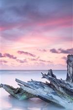 Caribe, mar, tronco de árvore morto, oceano, nascer do sol