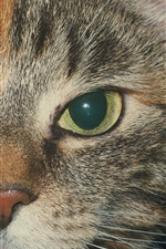Preview iPhone wallpaper Cat face, eyes, mouth, whisker
