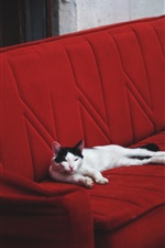 Preview iPhone wallpaper Cat rest on sofa
