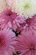 Preview iPhone wallpaper Chrysanthemums flowers, white and pink