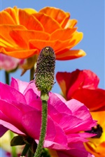 Preview iPhone wallpaper Colorful poppies flowers, stem, sky