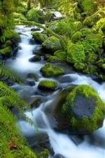 Creek, stones, moss, forest, green