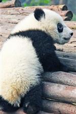 Preview iPhone wallpaper Cute panda cub