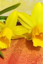 Daffodil, yellow petals