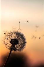 Preview iPhone wallpaper Dandelion, dusk