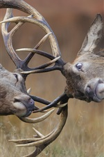 Preview iPhone wallpaper Deer, horns, playful