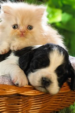 Preview iPhone wallpaper Dog and cat, basket, friends