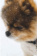 Preview iPhone wallpaper Dog in winter, snow
