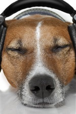 Preview iPhone wallpaper Dog relax to listen music, headphones, funny animals