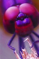 Dragonfly eyes macro photography