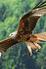 Preview iPhone wallpaper Eagle flying, wings