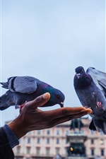 Preview iPhone wallpaper Feeding pigeons, hand, city