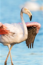 Preview iPhone wallpaper Flamingo, wings, lake, water